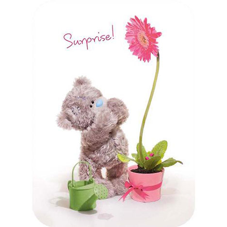 Tatty Teddy with Flower Pot Birthday Me to You Bear Card  £1.60
